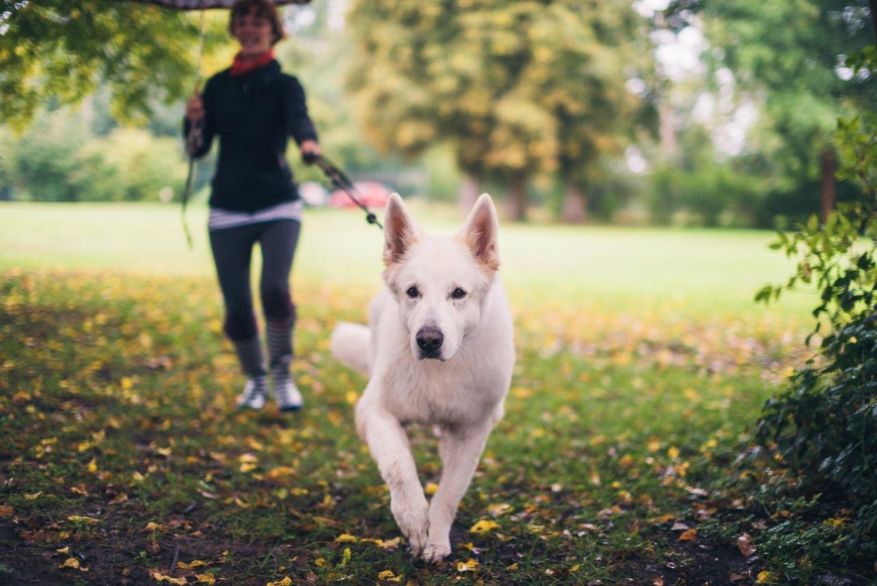 "Hundepsychologin ""Frau Kniesel"" mit Hund Gizmo"